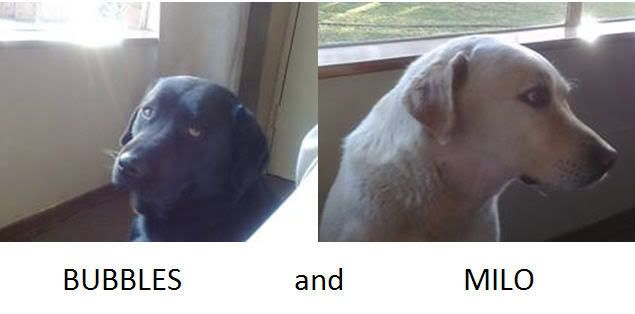 Home for Labs? Homefordogs