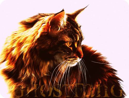Redstar of Flameclan Ghostfang