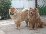 y vendran cachorros? Th_DSCN0793
