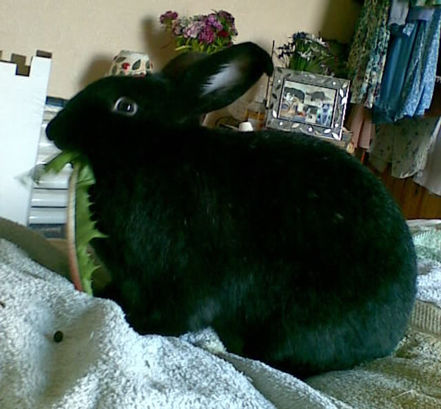 Forum Members Rabbits Photobucket-Bella-4