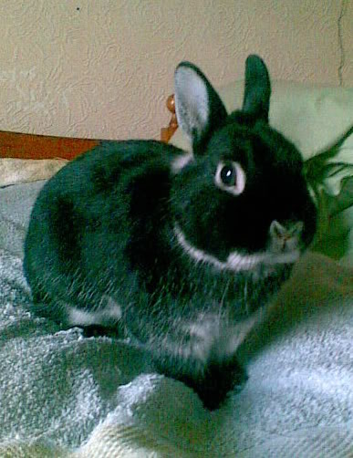 Forum Members Rabbits Photobucket-Tarquin-3-1