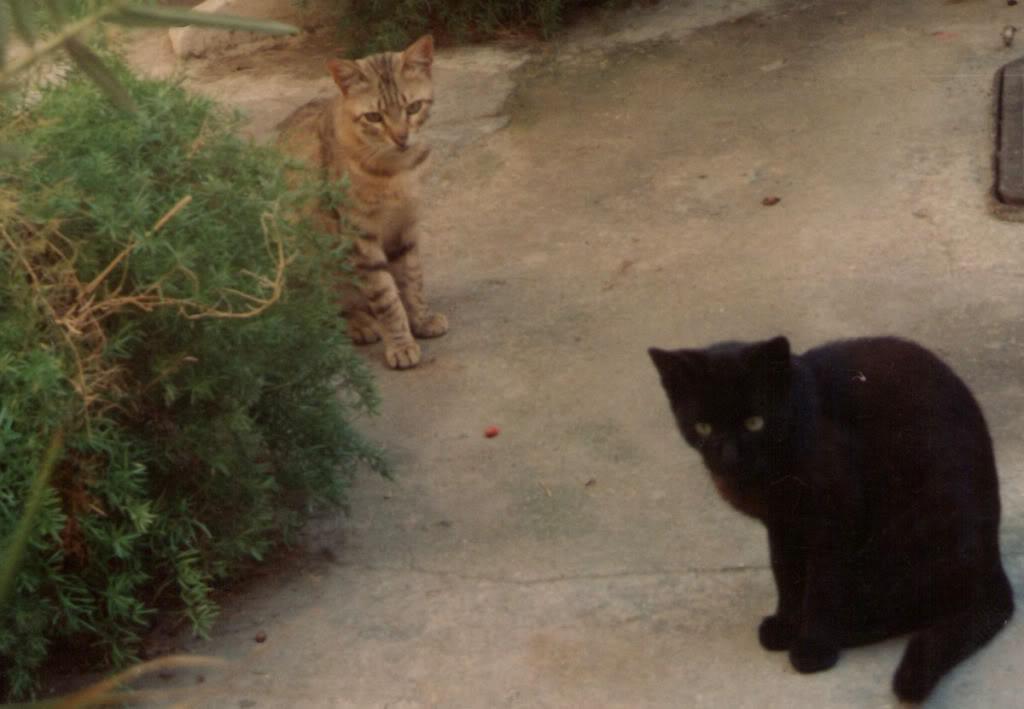 Τα αδεσποτάκια που σημάδεψαν τη ζωή μας! Kitty02