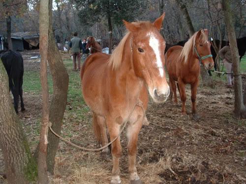 Ranch Bubač CopyofPicture010