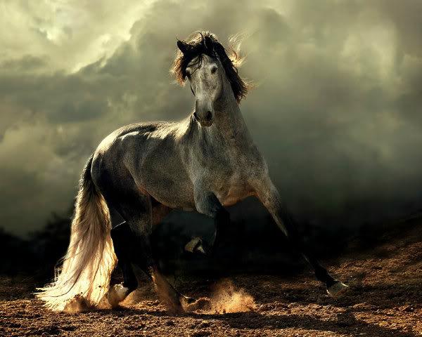 ¡Muestra a tu mascota! Arabian-horses-1