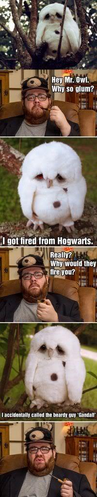 Curiosidades - Página 2 Owlhogwarts