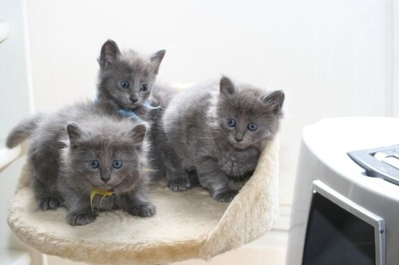 Ladoga´s kittens! IMG_3090