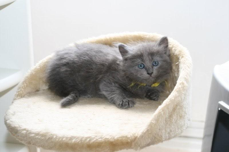 Ladoga´s kittens! IMG_3106