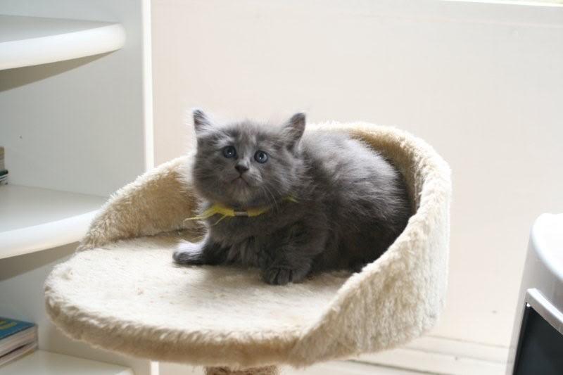Ladoga´s kittens! IMG_3115