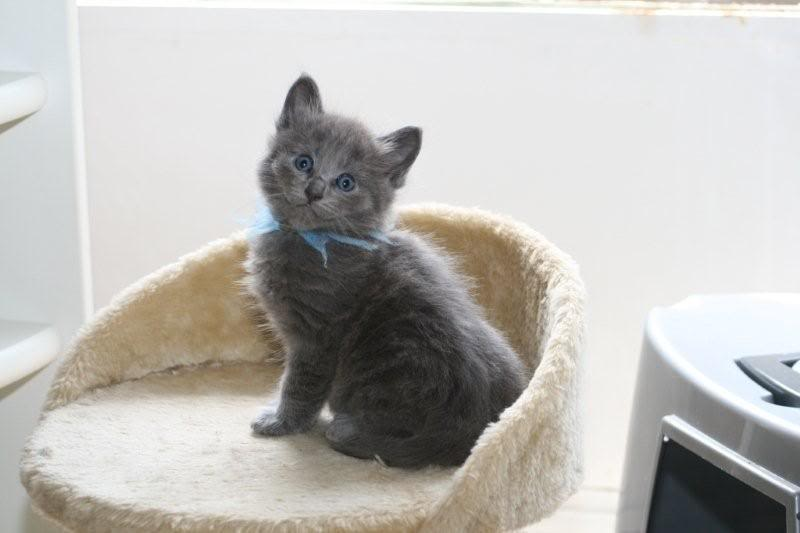 Ladoga´s kittens! IMG_3125