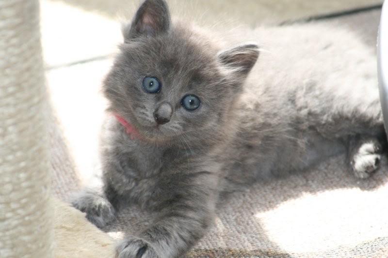 Ladoga´s kittens! IMG_3143