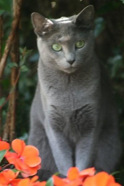 Ladoga´s kittens! IMG_3170