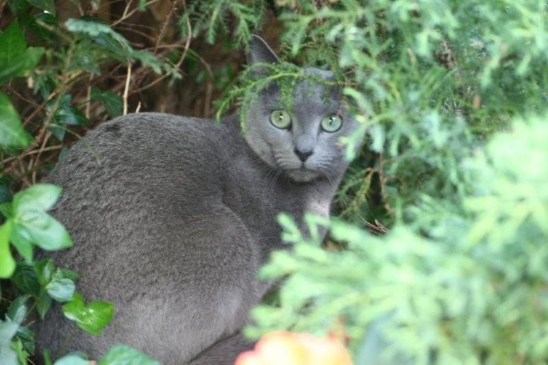 Ladoga´s kittens! IMG_3195