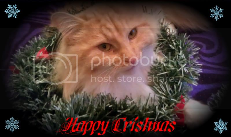2011 CHRISTMAS TOP CAT COMPETITION *Winner is JERRY* IMAG0312-1
