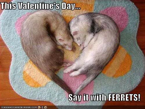 Not exactly politically correct Valentine's Day goodies Funny-pictures-celebrate-valentines