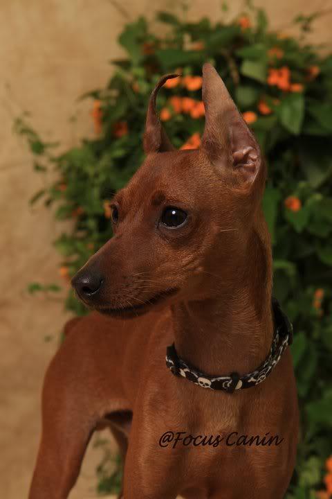 Mes chiens  Mac70_5053529_6355133_n
