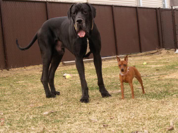 Mes chiens  Rub_5554752_7342568_n
