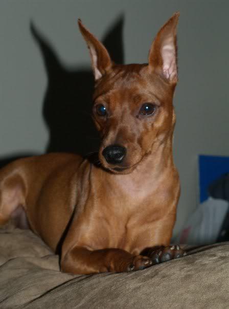 Mes chiens  Ruby59_4266428_2198479_n