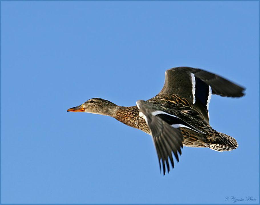 In flight for Jono! Fagyos-land