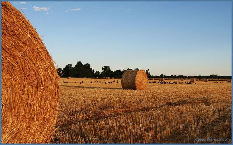 Hayrolls in sunrise... Aug-17-2007-023