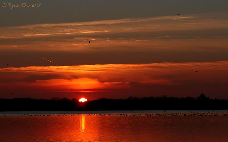 Evening birds! Nov-10-2007-043