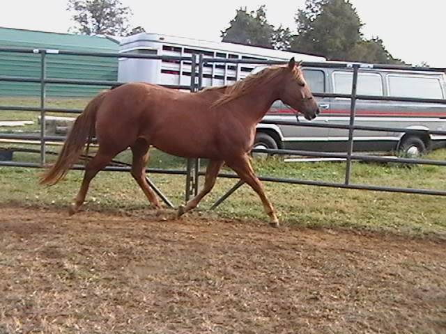 LOL! I have two horses for sale...added a few more :( Update: Daisy029