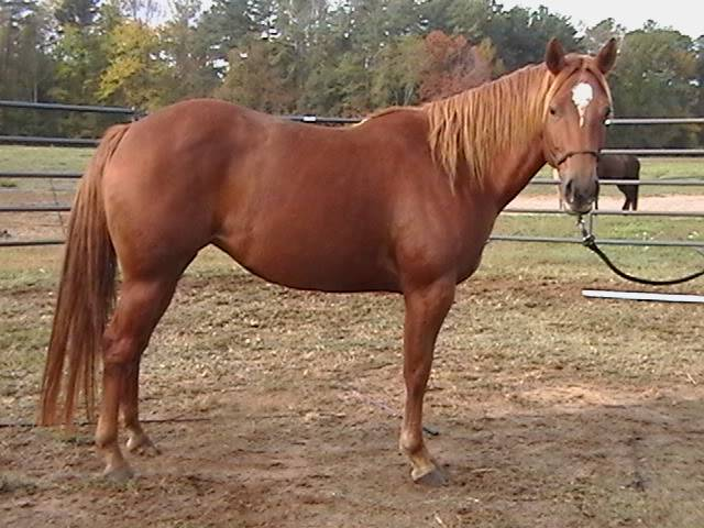 LOL! I have two horses for sale...added a few more :( Update: Daisy034