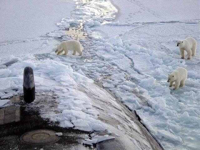 sous marins dans le monde Polar_bears