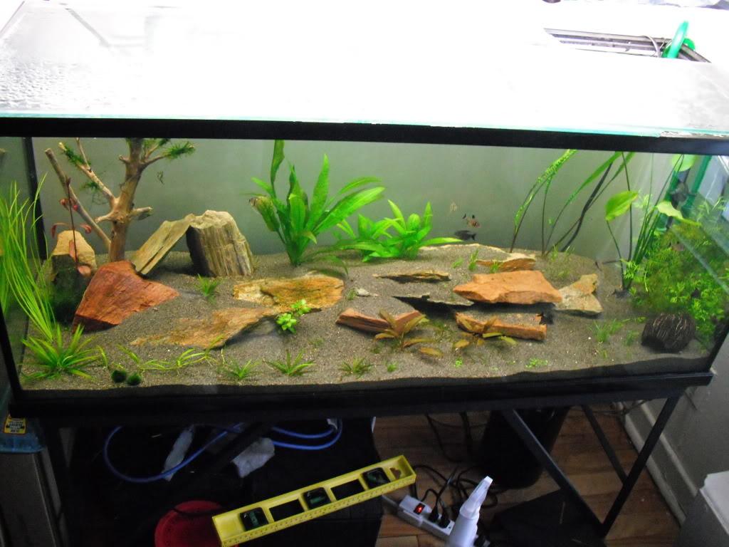 Fabrication d'un aquarium de 600L en plywood. DSCF0047