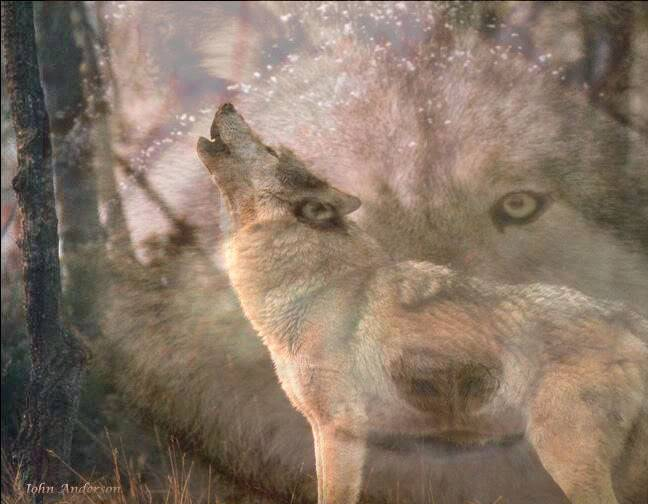 ~~~~~~~~THE PACK~~~~~~~~~~~ Wolves