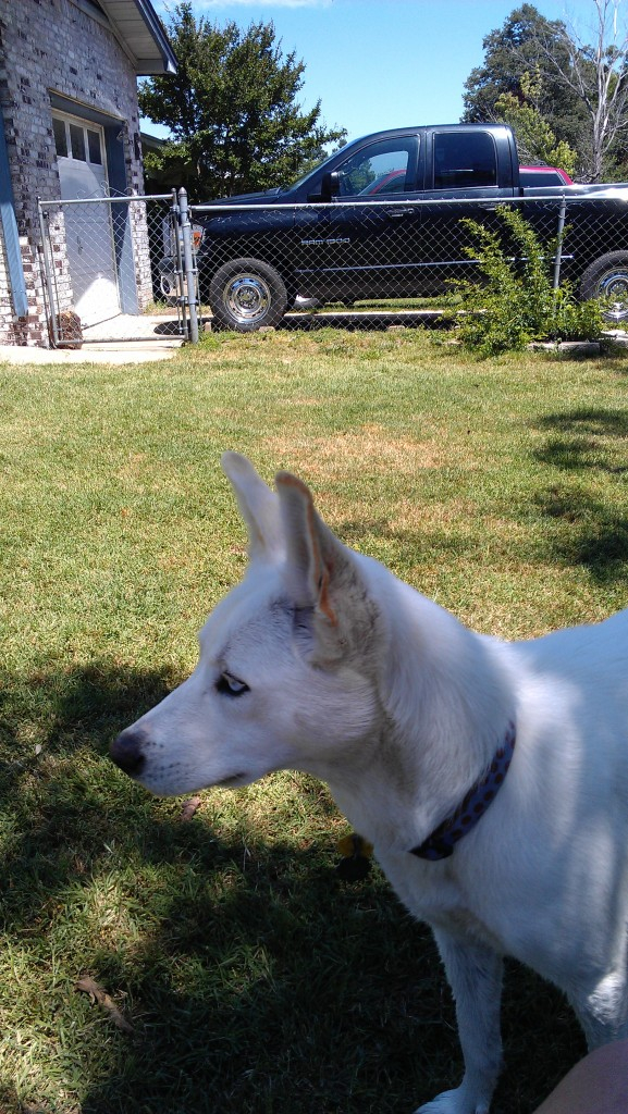 Bella, Chase, and Dakota  IMAG0455