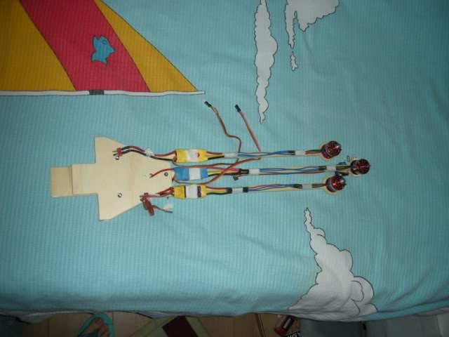 Tricoptero DSCN5193800x600