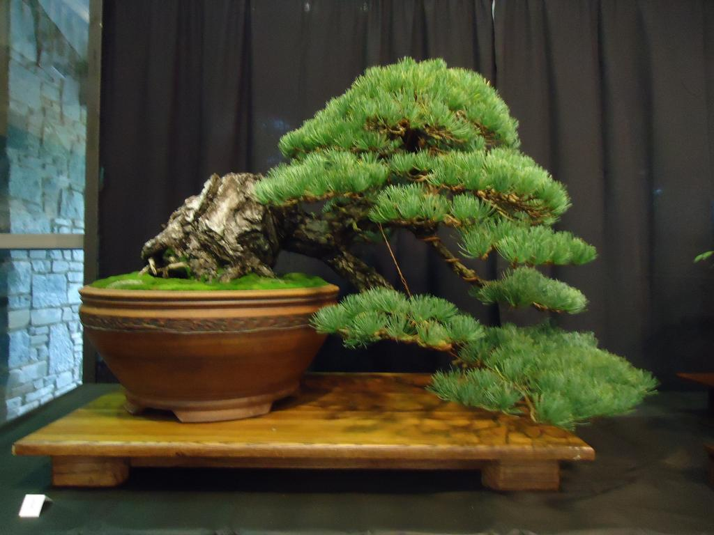 Carolina Bonsai Expo 2014 DSC02702_zps336d8ca8