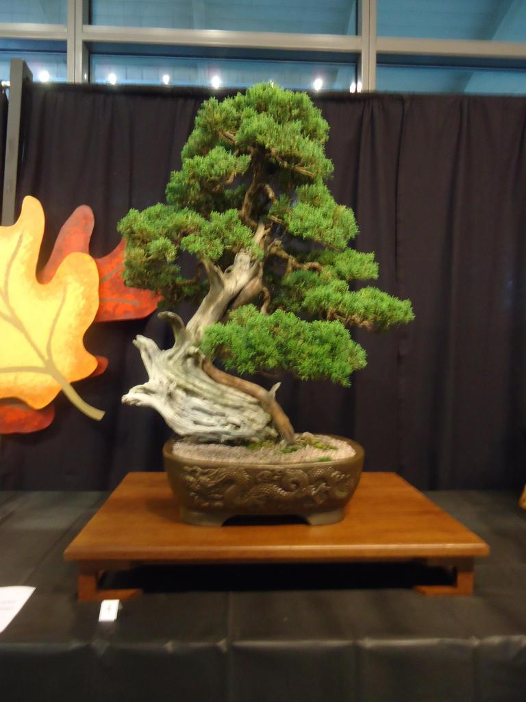 Carolina Bonsai Expo 2014 DSC02703_zps9b79a2d1