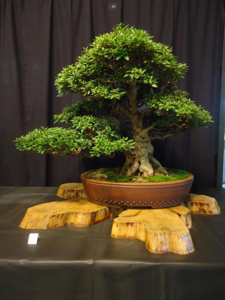 Carolina Bonsai Expo 2014 DSC02704_zps97136037