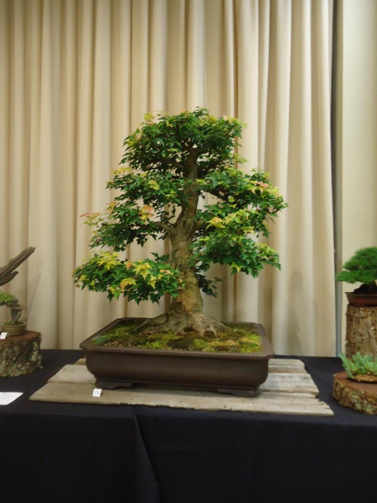 Carolina Bonsai Expo 2014 DSC02718_zps278e2dcf