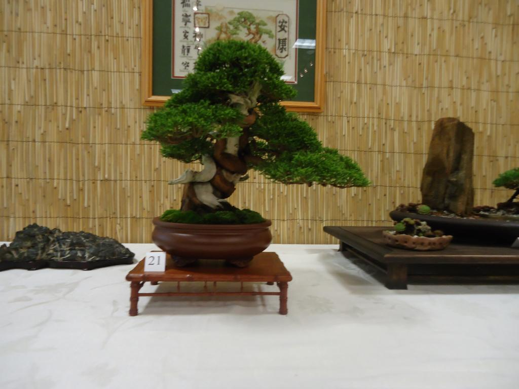 Carolina Bonsai Expo 2014 DSC02719_zps7954294b