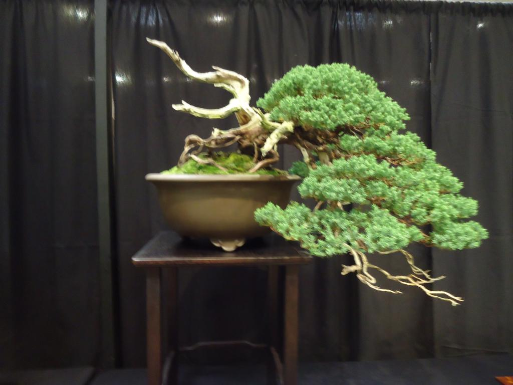 Carolina Bonsai Expo 2014 DSC02723_zps9f546da3