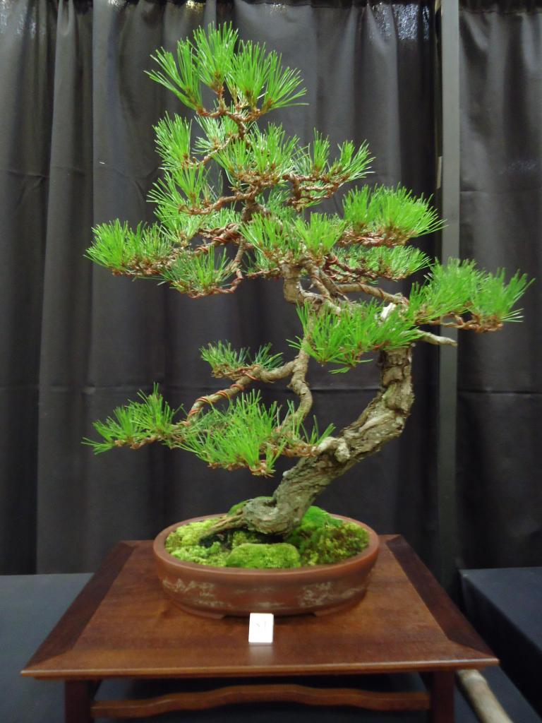 Carolina Bonsai Expo 2014 DSC02727_zps2a23d212