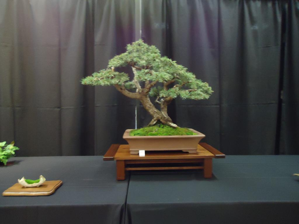 Carolina Bonsai Expo 2014 DSC02744_zpsc33a8b82