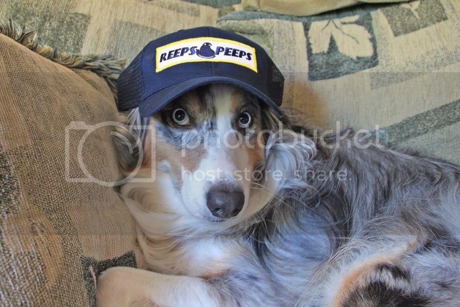 """The """"I don't own my pet, my pet owns me!"""" Thread. Guinness_JonReepsHat4x6"""