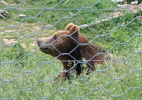 Medvjedi Zavizan-krasno-kuterevo-117