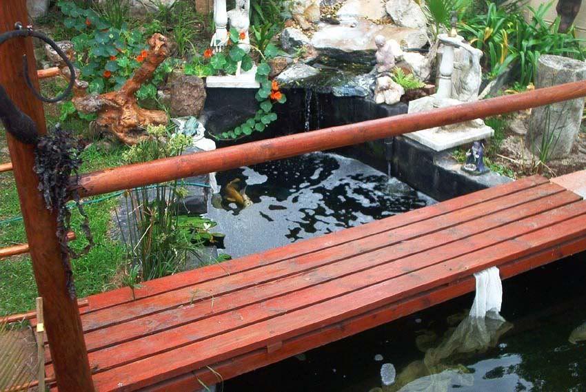 Natural pond Koi132