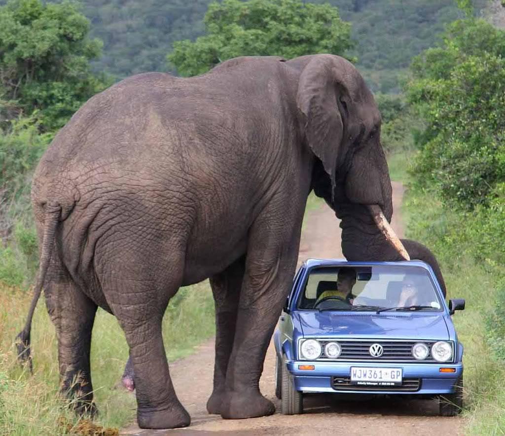 Interesting photo,  Eisch!! Olifant
