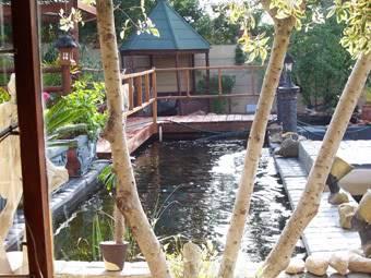 My new pond Pond
