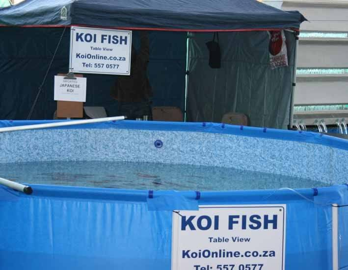 Western Cape Koi Show - A Rumour, is it true? Show-ko