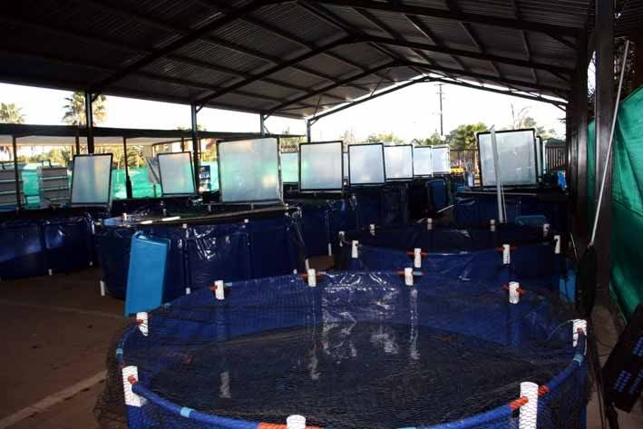 Western Cape Koi Show - A Rumour, is it true? Show-setup