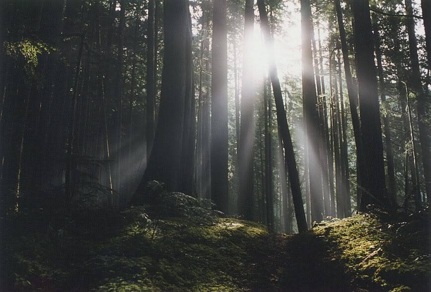 Fern Loop Forest