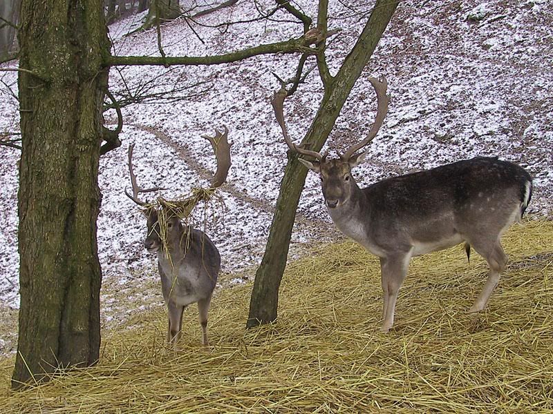 Today's post (Dean's stones) - Page 2 Deers