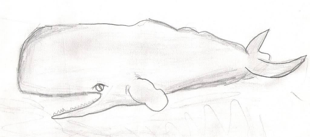 My Art Gallery Whale