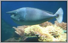 Aquaria Museet Pez1